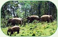 devikulam-wildlife