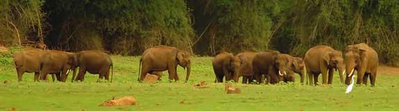 elephanttop