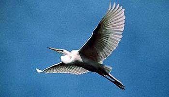kumarkom-bird-sanctuary